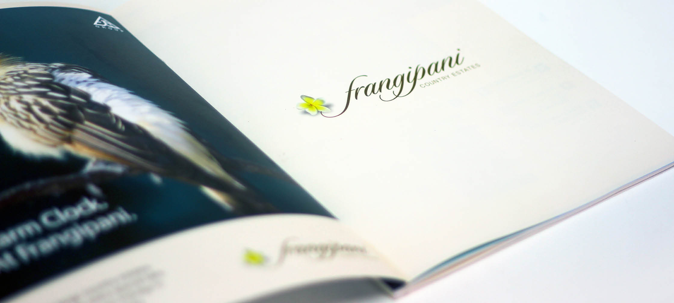 Real Estate Rezonant Design Frangipani Brochure